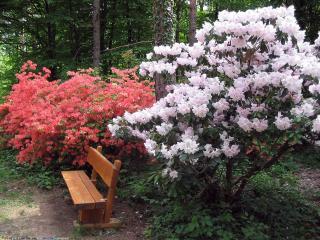 обои Цвет деревьев, в весеннем сквере фото