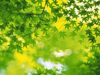 обои Много зеленых листьев фото