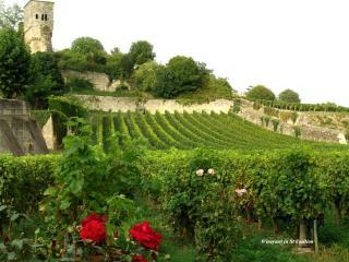 обои Wineyard in St Emilion фото