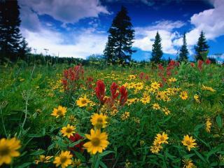обои Поле цветов фото