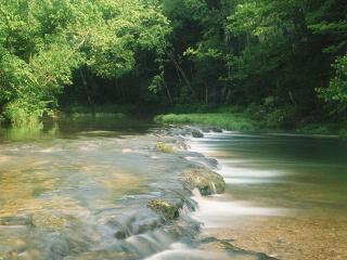 обои Быстрый летний ручей, у зеленых крон деревьев фото