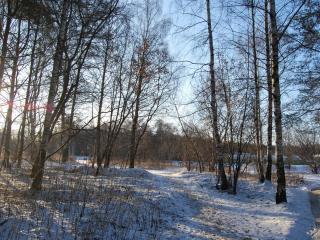 обои Заходя в лес фото