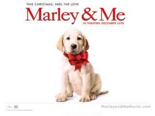 обои Марли и Я,   Щенок фото