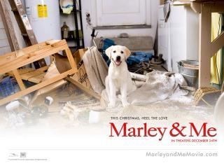 обои Марли и Я фото