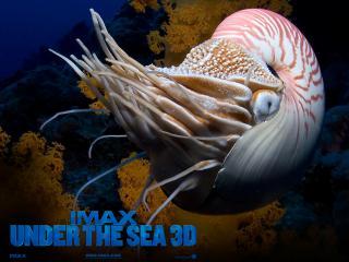 обои IMAX Under The sea фото