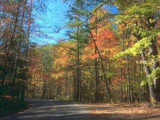 обои Осенняя дорога фото