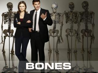 обои Bones. Люди и Скелеты фото