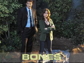 обои Bones. В лесу фото