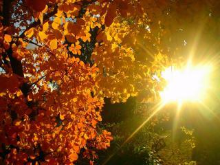 обои Солнечный осенний день фото