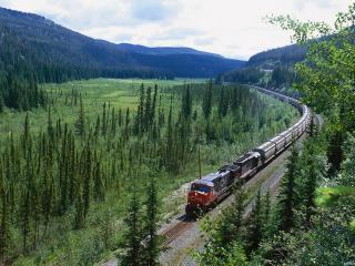 обои Красивый лесной пейзаж фото