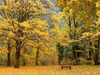 обои Лавочка под деревьями фото