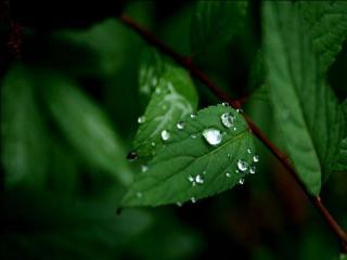 обои Листья после дождя фото