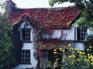 обои Весь дом в цветах фото