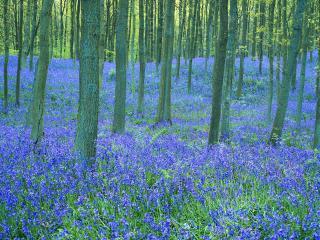 обои Фиолетовая лужайка фото