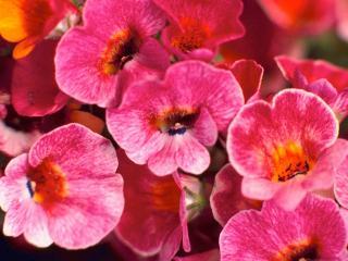 обои Удивительные цветы фото