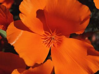 обои Оранжевые лопасти фото