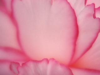 обои Лиловый цветок фото