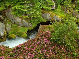 обои Река Paradise в штате Вашингтон фото