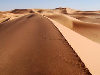 обои Песчаные дюны на востоке Алжира фото