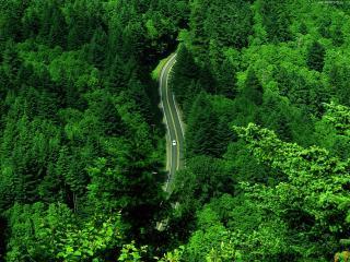 обои для рабочего стола: Зелёный лес