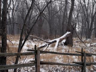 обои Сломанное дерево поздней осенью фото
