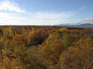 обои Желтые деревья осенью фото
