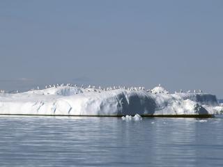 обои Льдина в море фото