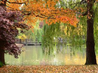 обои Деревья и река осенью фото