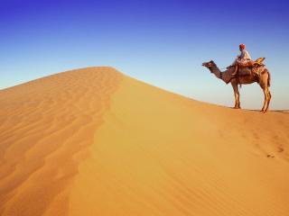 обои Верблюд в пустыне фото