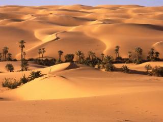 обои Палящий пустынный зной фото