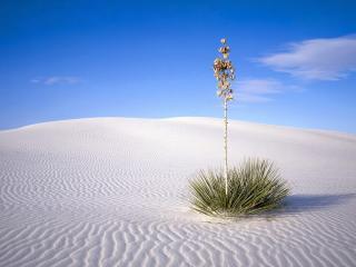 обои Одинокое деревце в пустыне фото