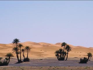 обои Начало пустыни фото