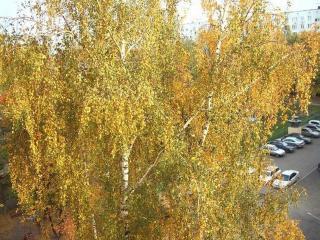 обои Осенний взгляд фото