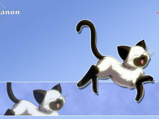 обои Позитивный кот фото
