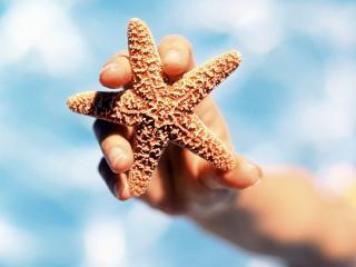 обои Морская звезда фото