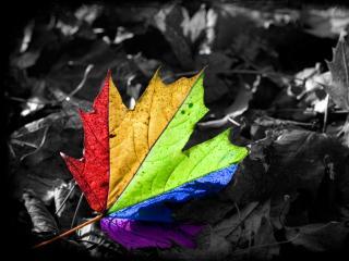 обои Листок цвета радуги фото