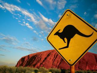 обои Осторожно кенгуру фото