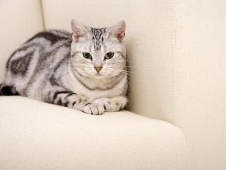 обои для рабочего стола: Неотразимый кот с забавными глазищами