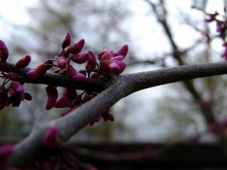 обои Весенние цветки на дереве фото