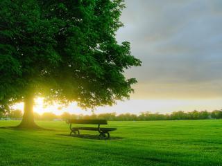 обои Лавочка на зеленой поляне вечером фото