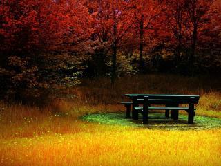 обои Огненная осень и стол для пикника фото