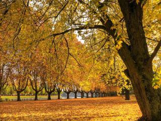 обои Золотая осенняя аллея парка фото