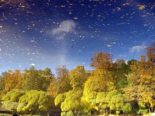 обои Отражение осени в пруду фото