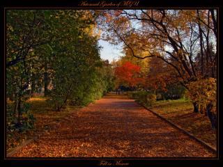 обои Бархатная осень фото