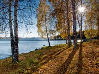 обои Золотая осень фото