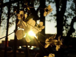 обои Цветочки у дерева фото