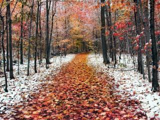 обои Two  Seasons фото