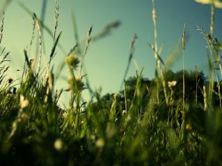обои Вечерняя трава фото