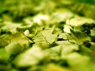 обои Ковер из желтеющей листвы фото