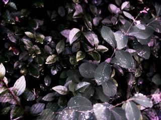 обои Листья на рассвете фото